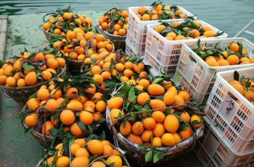 赣南脐橙零售一件代发