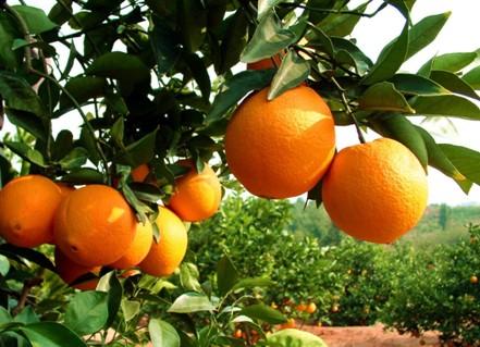 重金打造的马到橙功品牌