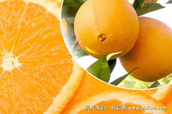 脐橙施什么肥